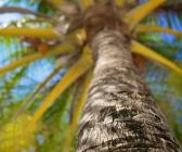 675x900-kuredu-palm-tree