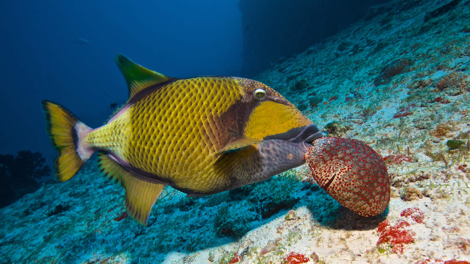 Coastal Furniture Florida Mint Green Benjamin Moore Paint Color furthermore Reef Triggerfish ...