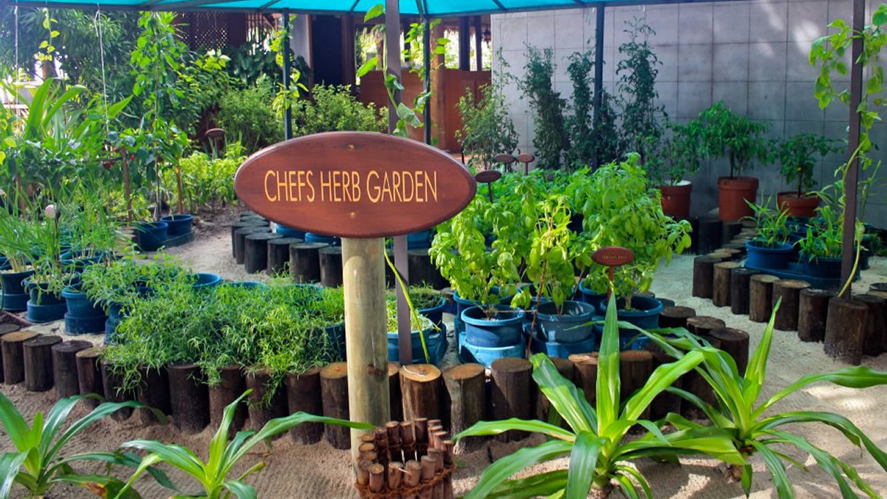 The Herb Garden on Kuredu –