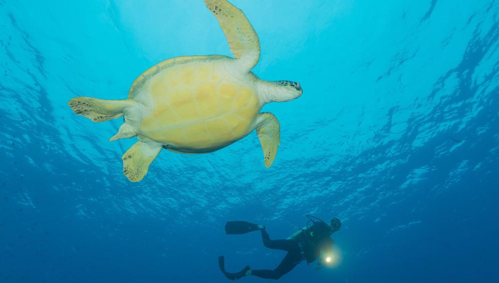 Turtles Maldives Resort