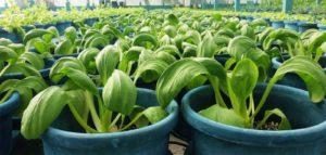 Kuredu Maldives Greenhouse