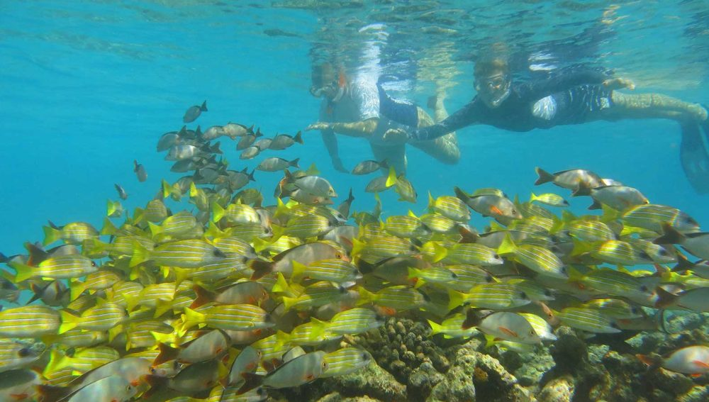 Kuredu Resort Maldives snorkelling