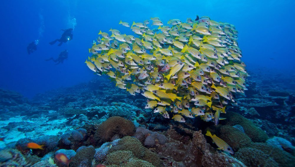 Kuredu Resort Maldives diving packages