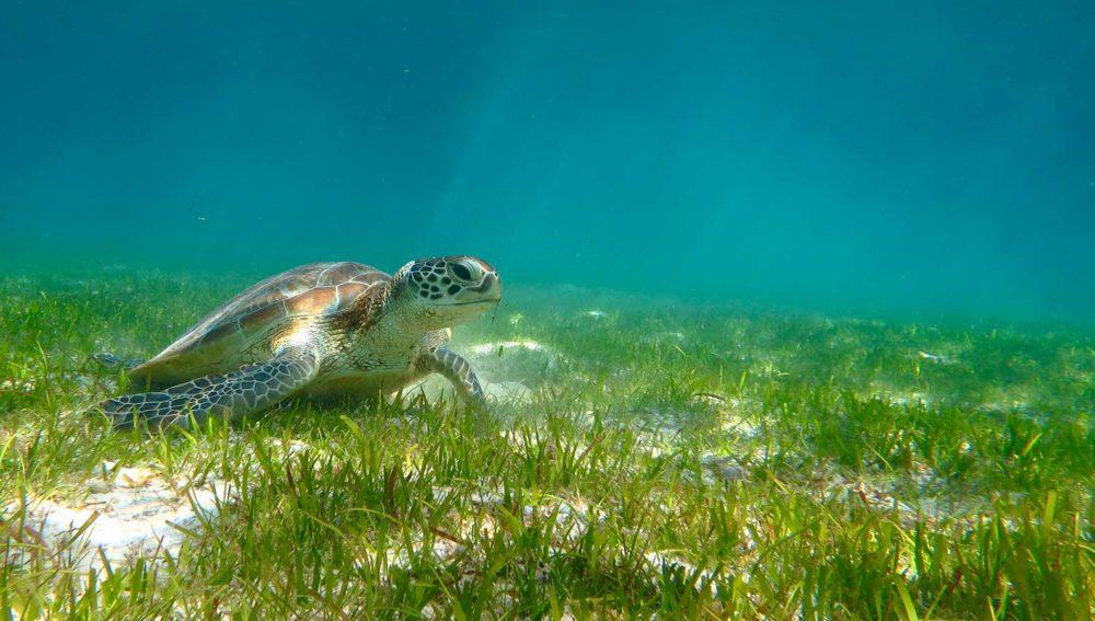 Turtle Kuredu Resort Maldives