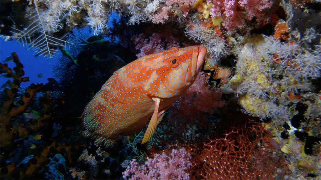 House Reef Night Dive
